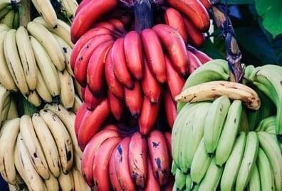 グリーンバナナを食べると痩せやすい。て本当?